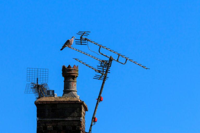 bird on external aerial in romford