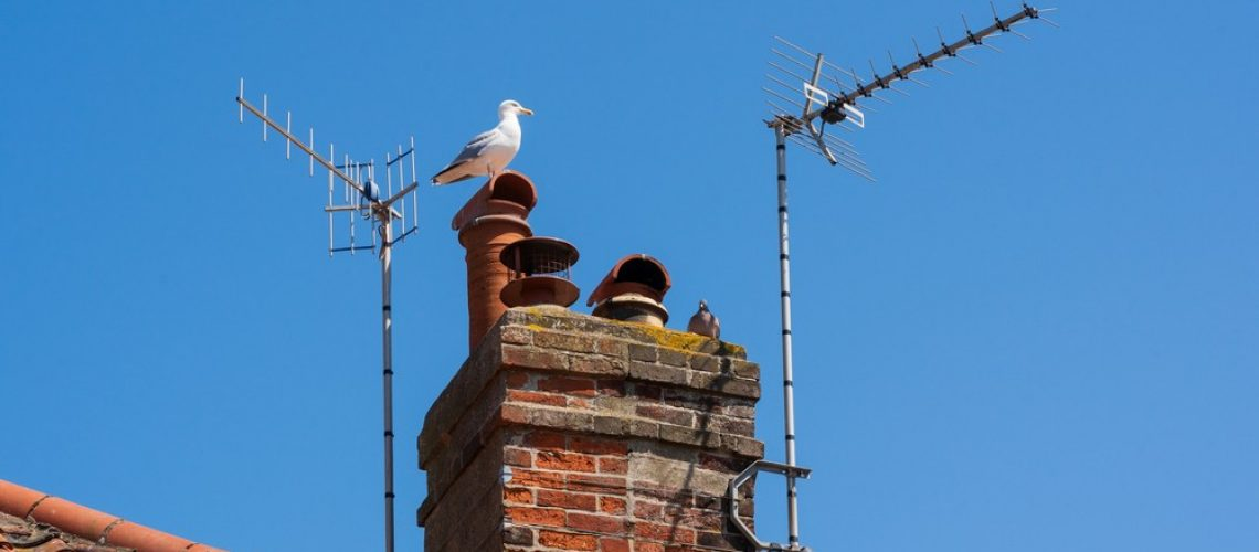 Seagull on top of chimney with tv aerials